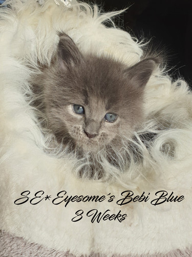 Bebi Blue 3 weeks.jpg