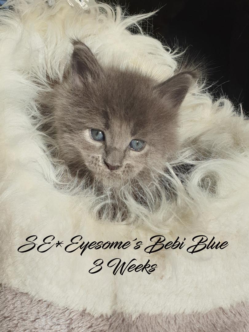 Bebi Blue 3 weeks.jpg