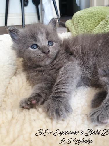 Bebi Blue 2,5weeks