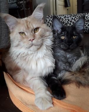 Marlon & Havanna