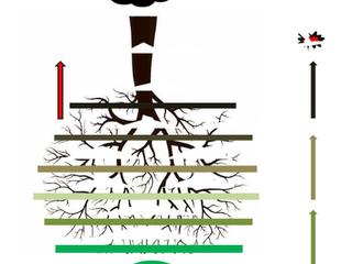 El árbol inverso