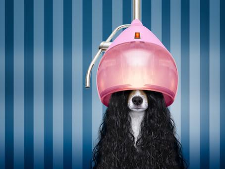 Lola: The World's Best Dog Groomer & Kim Kardashian
