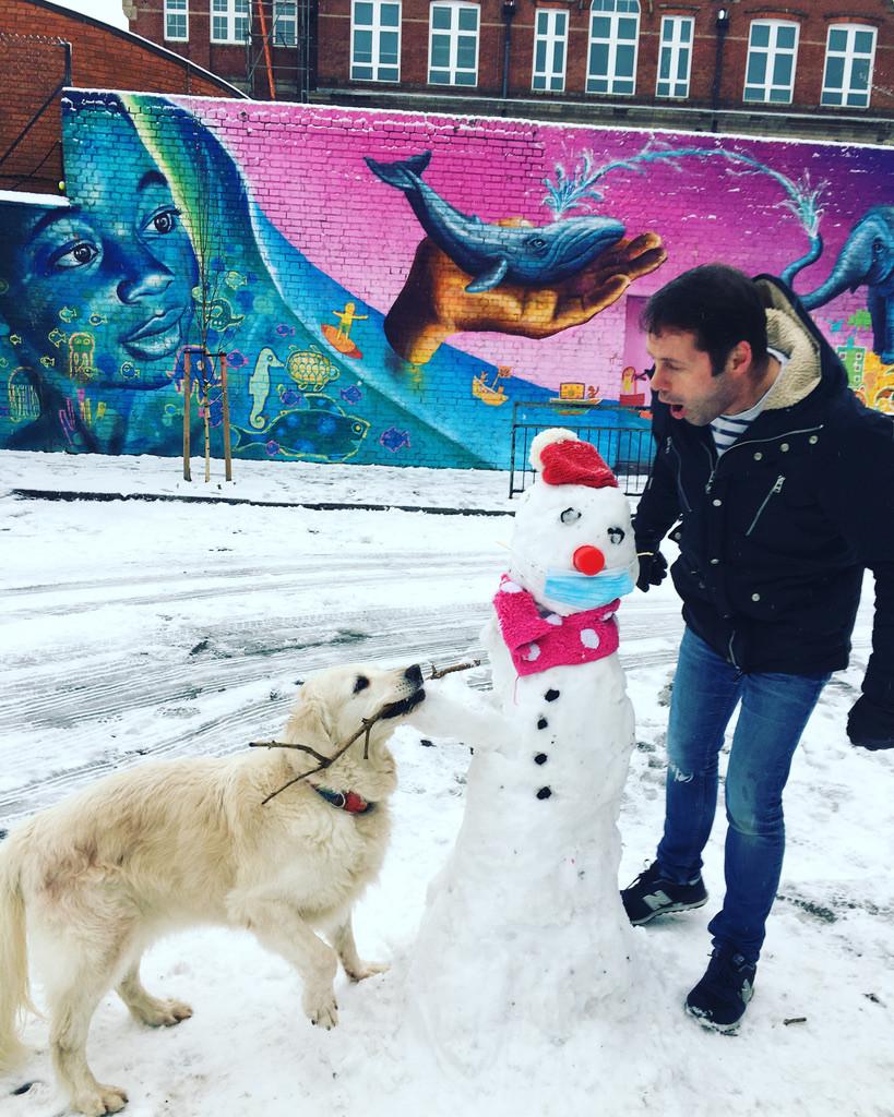 Golden Retriever, Blondie, stealing a snowman's arms