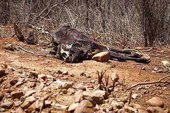São-José-do-Egito_0099.jpg