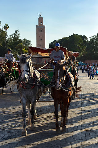 Marrakech_0612.jpg