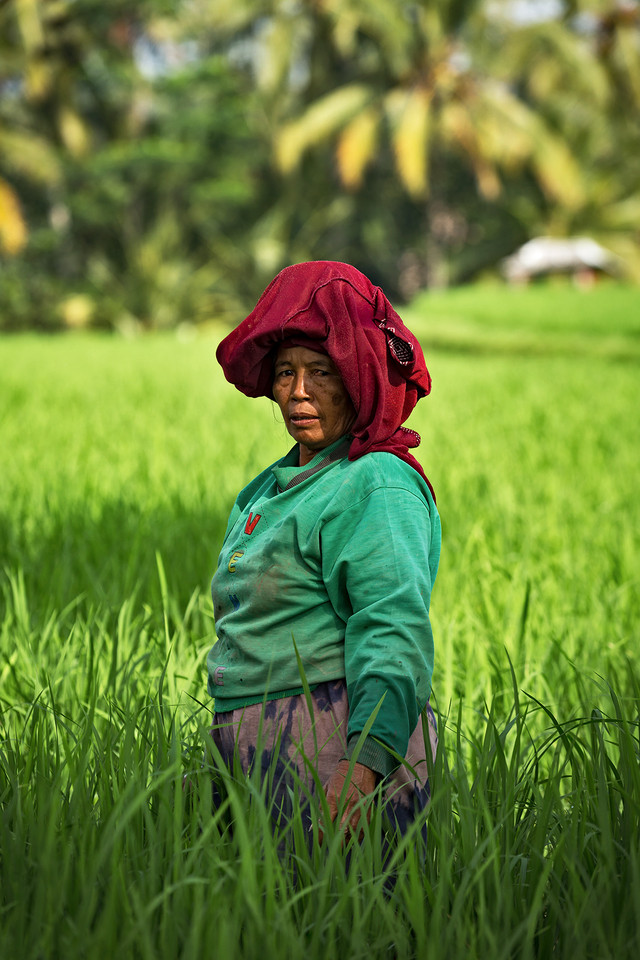 THE RICE FIELD PEASANT