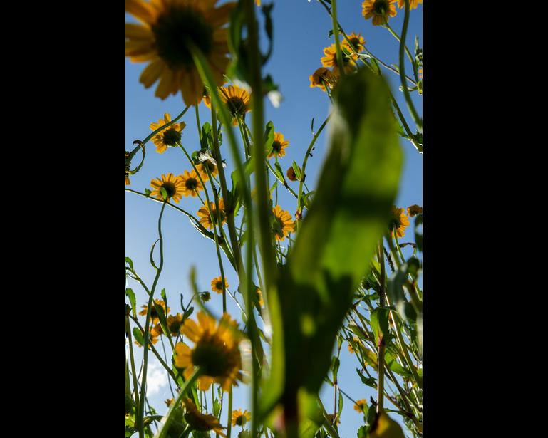 The World of Yellow Daisies.
