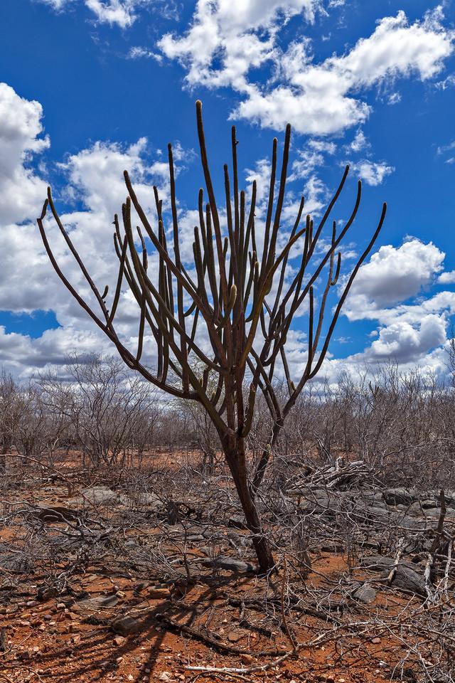 Floresta_0012.jpg
