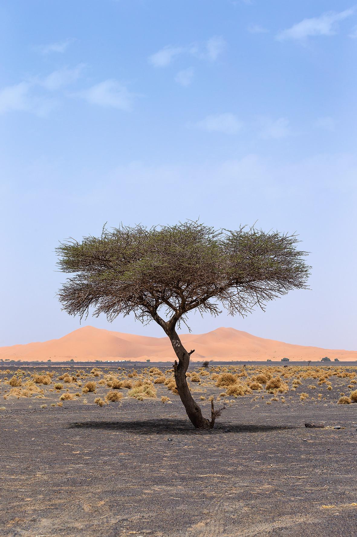 Trees-Landscape-Nature-Best-Contemporary