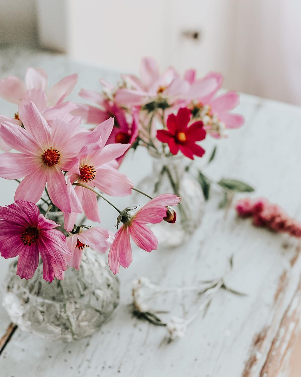 Cosmos flower meaning Jessica Turner Designs Blog