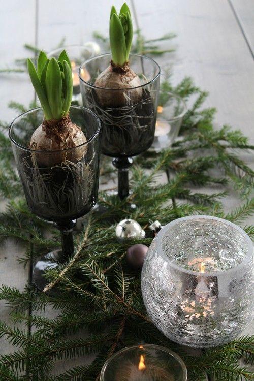 winter decor with hyacinth bulbs