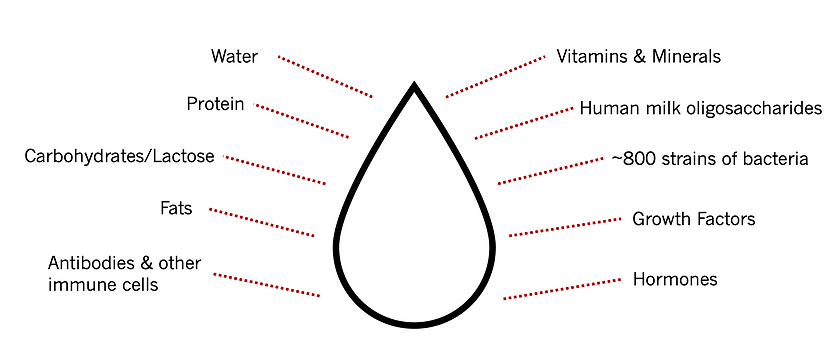 Human milk includes many bioactive compounds including: water, protein, carbohydrates/lactose, fats, antibodies, other immune cells, vitamins, minerals, human milk oligosaccharides, 800 strains of bacteria, growth factors, hormones.