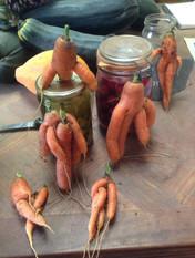 carottes fun.jpg
