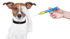 MASS RABIES VACCINATIONS IN APRIL