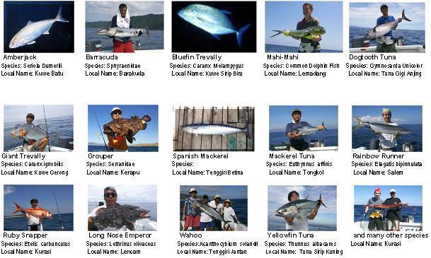 bali-fishing3.jpg