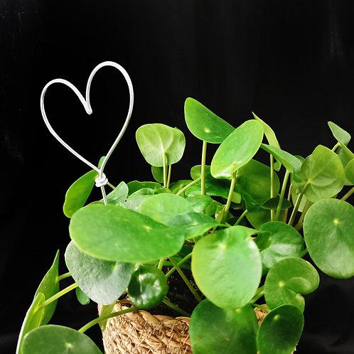 Love Heart Plant Topper