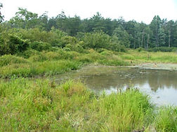 Summer2004Fieldwork 024.jpg