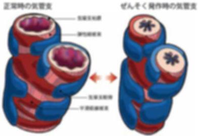 喘息 呼吸器学会ホームページ.jpg