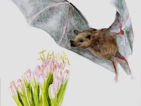 La relación amorosa entre los murciélagos y el agave.