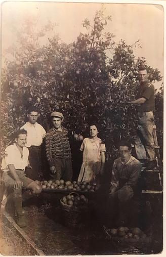 Shlomo Unreich and Orange Orchards