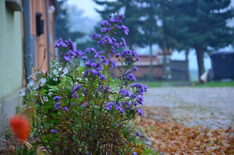 Blumen2.jpg