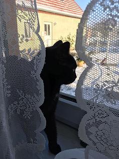 Katze1.jpg
