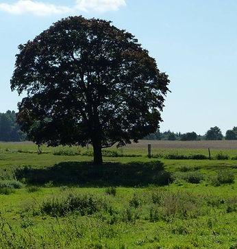 Baum1.JPG