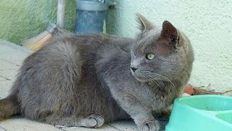 Katze3.JPG