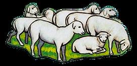 Trust-Like-Joseph-sheep.png