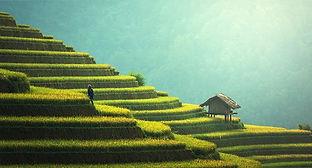 agriculture-1807581__340.jpg