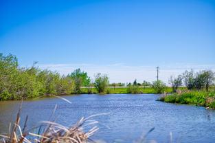 Pond 8.jpg