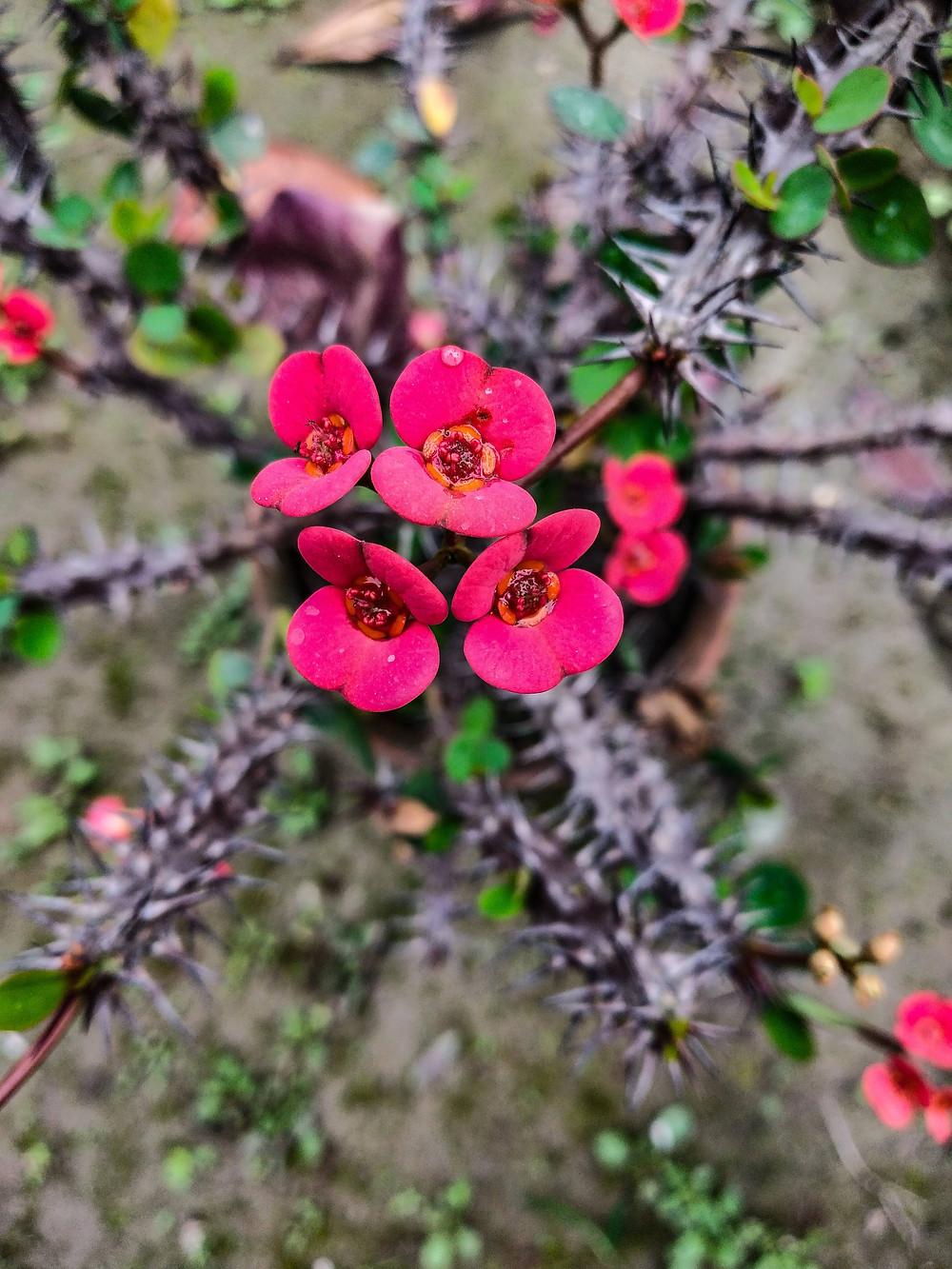Flower in thorns