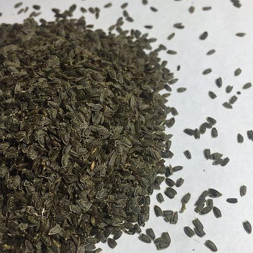 Spilanthes (Spilanthes oleracea)