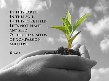 seeds-of-compassion-and-love-rumi-quote.