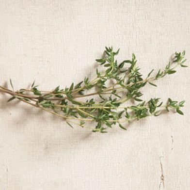 Seedling - Thyme