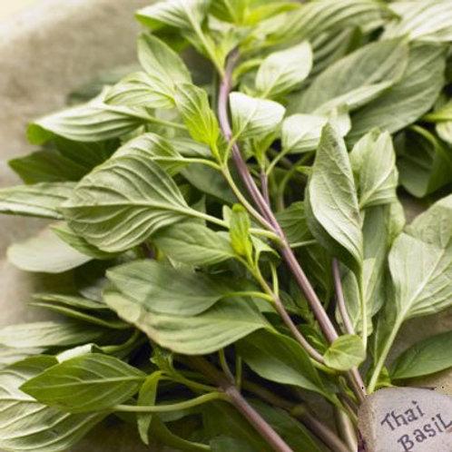 Seedling - Thai Basil