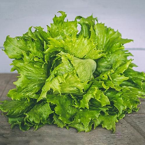 Seedling - Green Summer Crisp