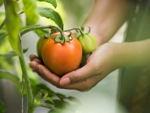 Osservatorio Food Sustainability PoliMi, le innovazioni per la sostenibilità nell'agroalimentare