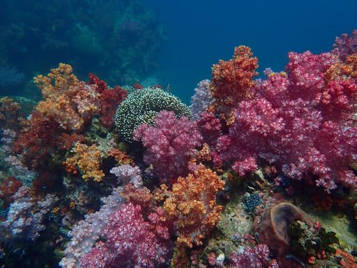 Aree marine protette, salvaguardia e sviluppo