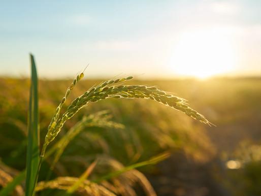 Agricoltura e finanza sostenibile, una relazione al via
