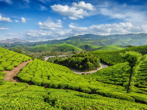 Quando fare l'indiano...è green, #storiesostenibili