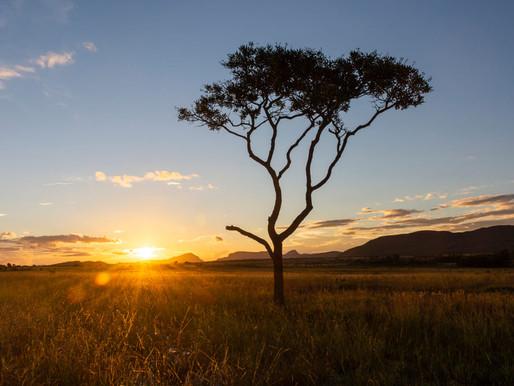 Natura, la brasiliana che non alza la temperatura #storiesostenibili
