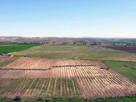 In Sicilia 2 parchi agro-fotovoltaici, il progetto di ENGIE con Amazon per l'energia verde
