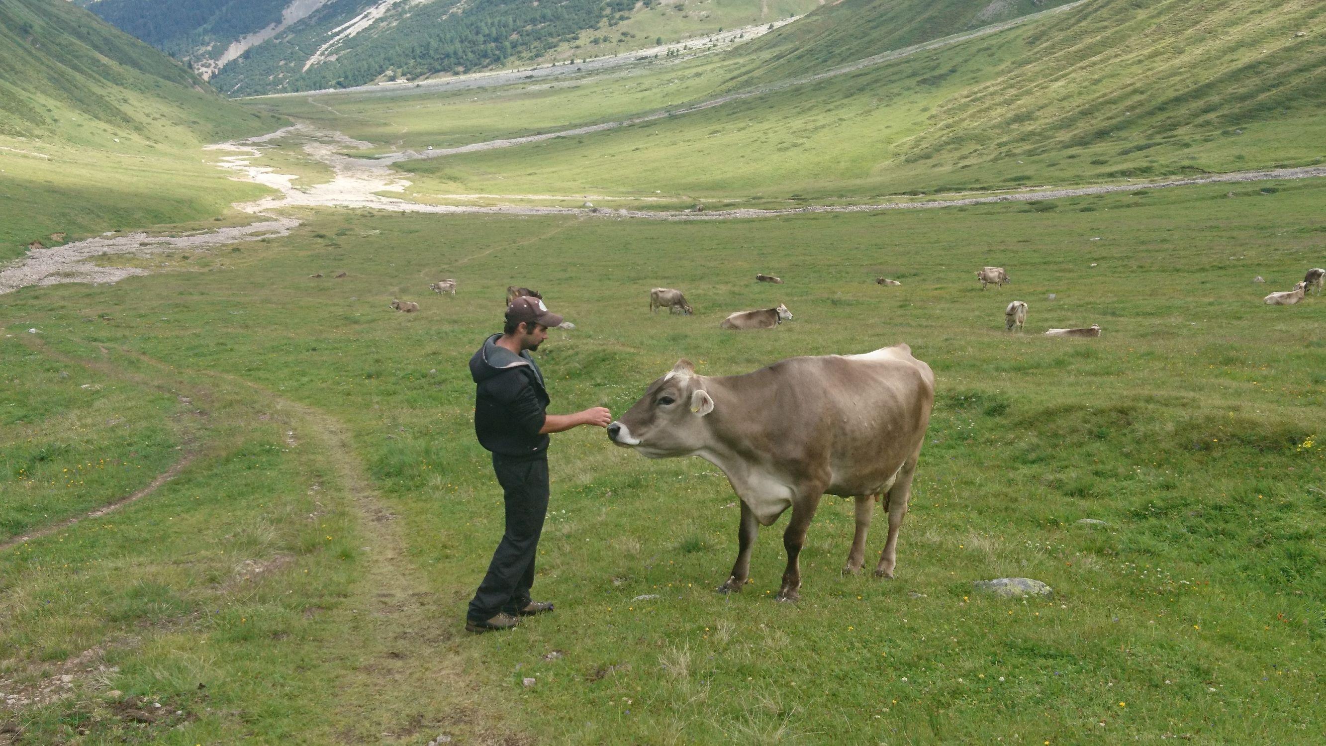 Besuch auf der Alp