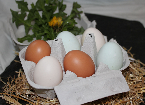 Bio Hühner Ei
