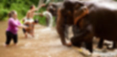 chiang mai elephants.jpg