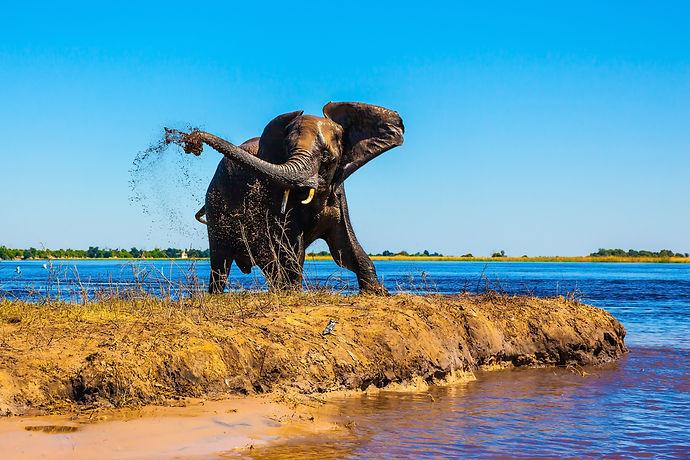 botswana wildlife .jpg