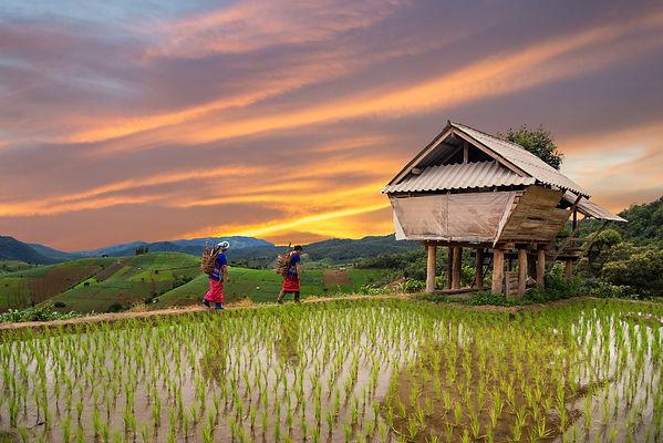 north thailand .jpg