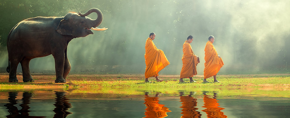 Young elephant with Monk alms round.jpg