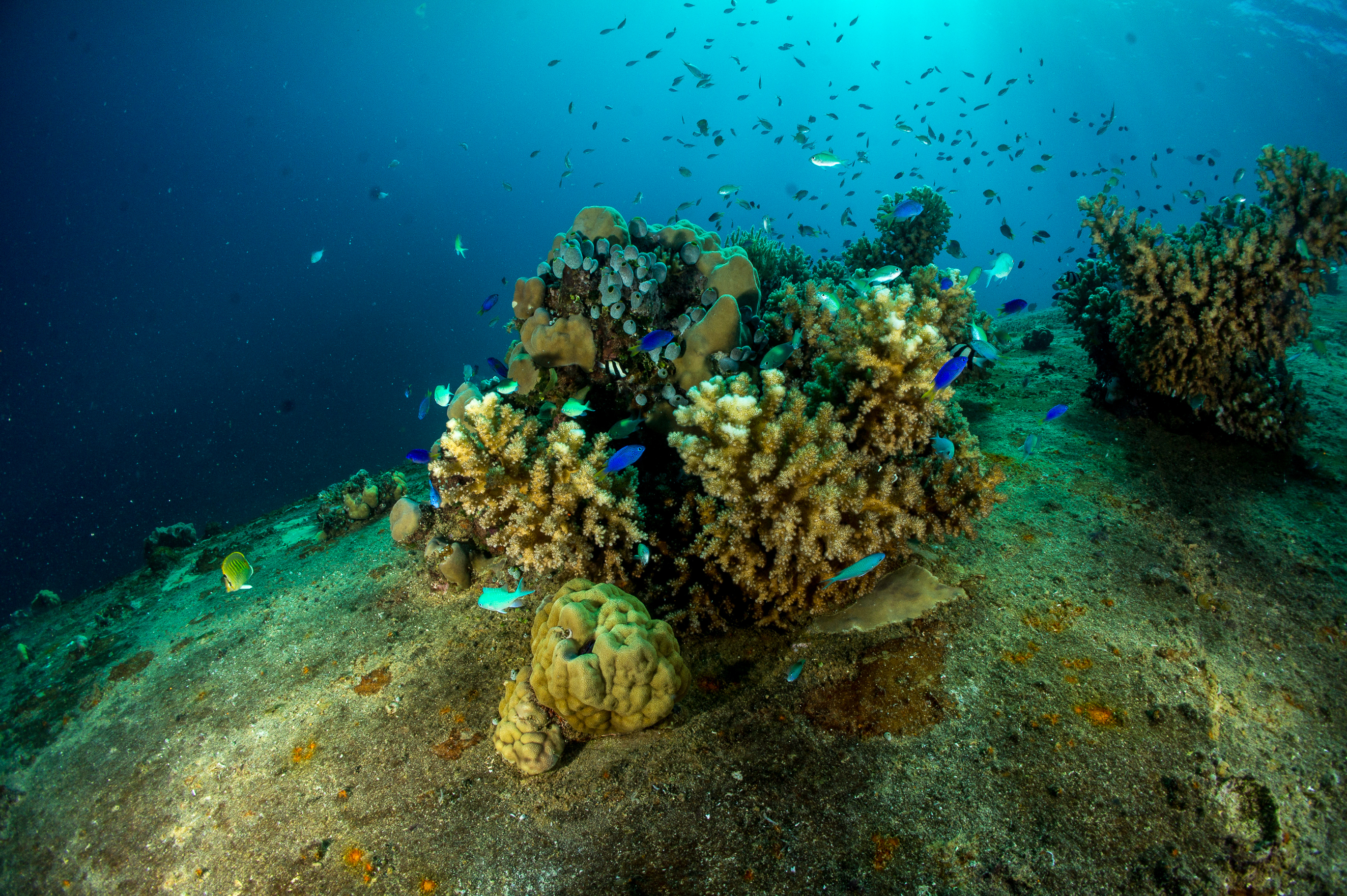 Coral growth on the hull of a sunken WWII cargo ship, Gosei Maru, at chuuk lagoon
